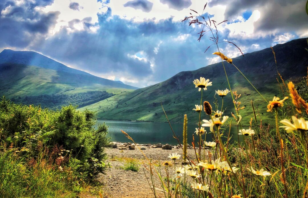 nature around wastwater