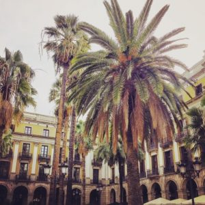 palm trees in Placa Reial Barcelona