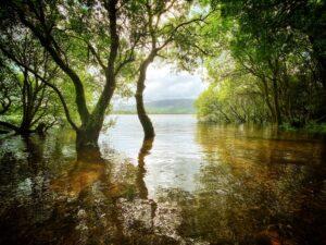 Bassenthwaite Lake Side Glade