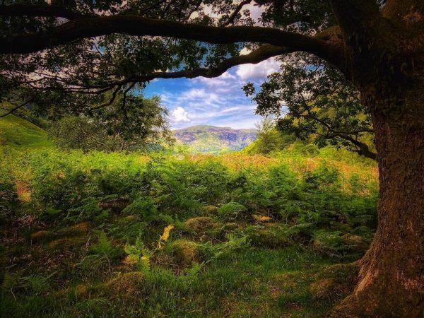 Borrowdale through the Trees