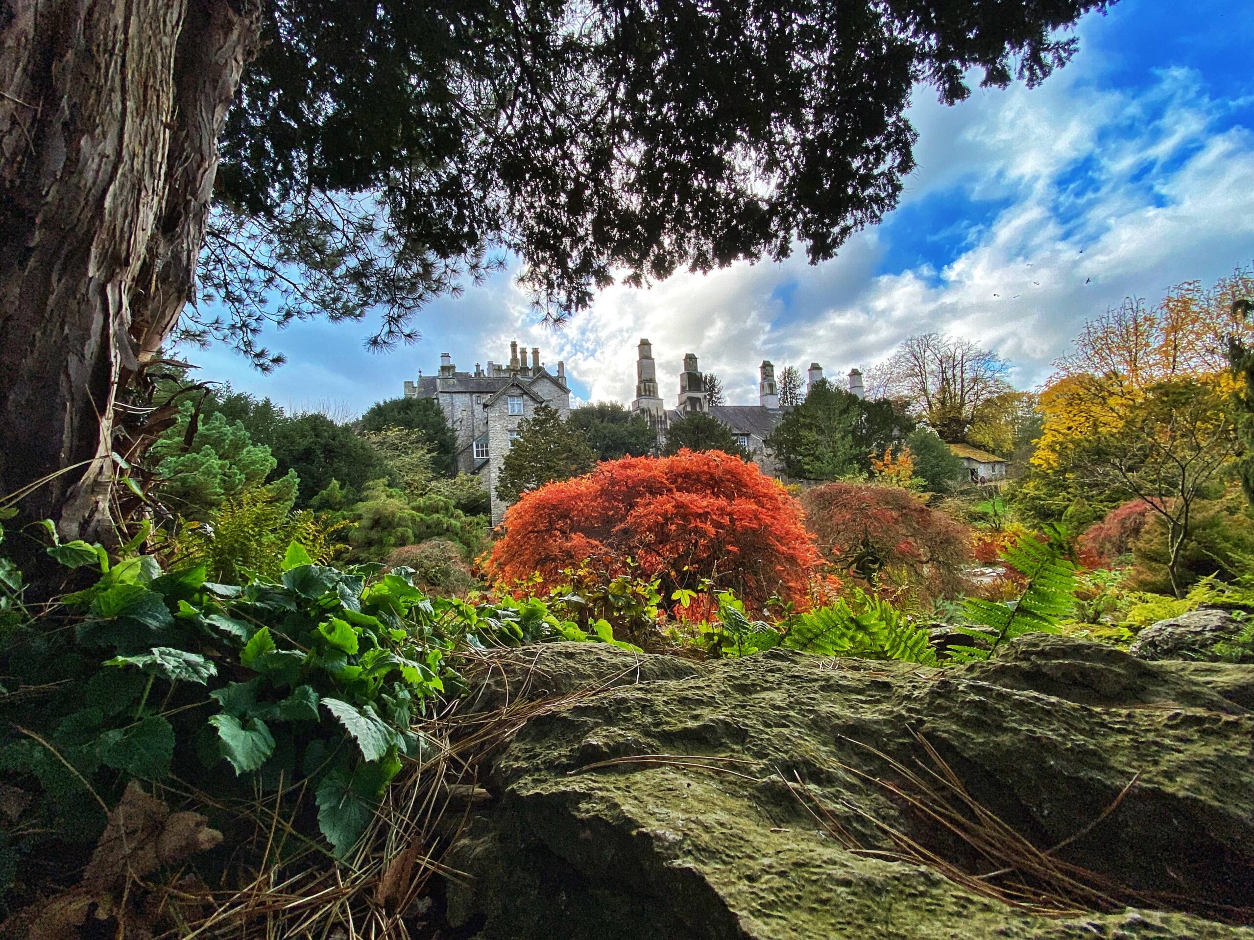 sizergh castle and garden autumn walk in the lake district