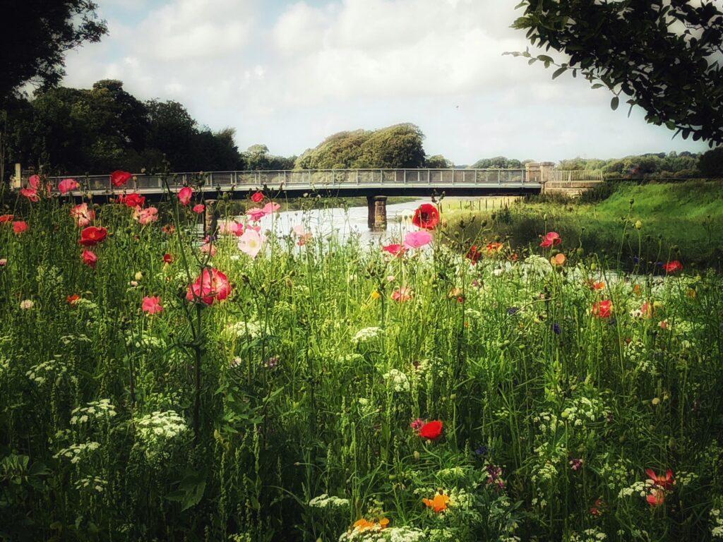 cartford country walk