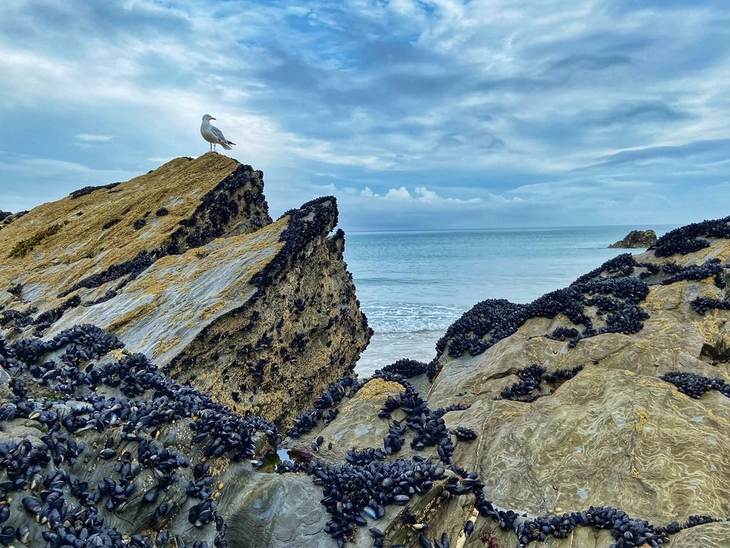 gull on beach rocks
