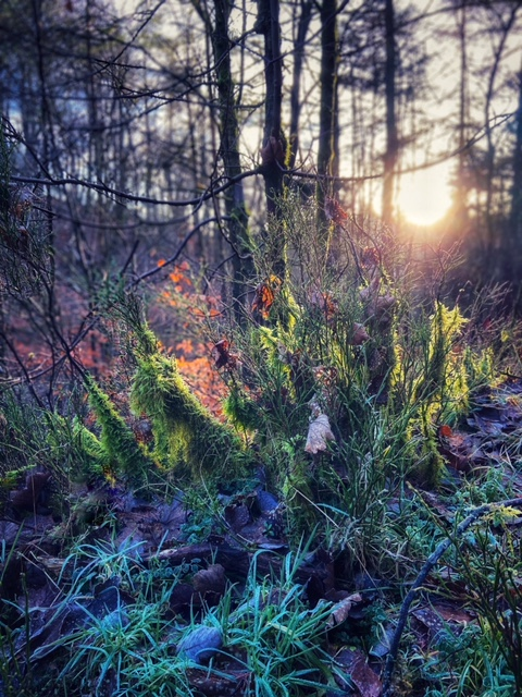 wellbeing benefits of forest bathing